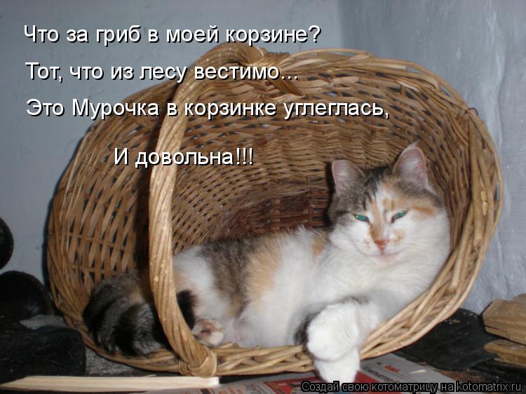 Котоматрица: Что за гриб в моей корзине? Тот, что из лесу вестимо... Это Мурочка в корзинке углеглась, И довольна!!!