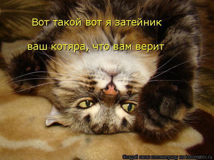 Котоматрица: Вот такой вот я затейник ваш котяра, что вам верит