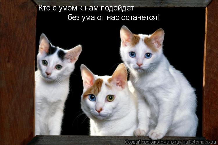 Котоматрица: Кто с умом к нам подойдет, без ума от нас останется!