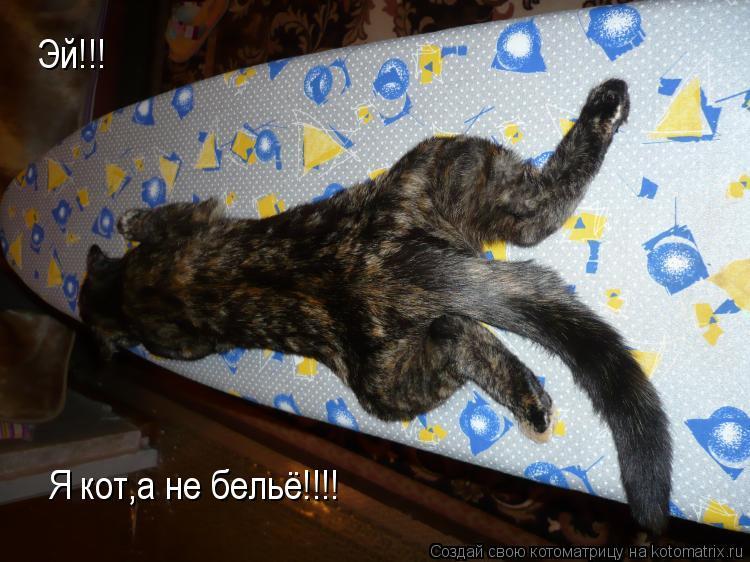 Котоматрица: Эй!!! Я кот,а не бельё!!!!
