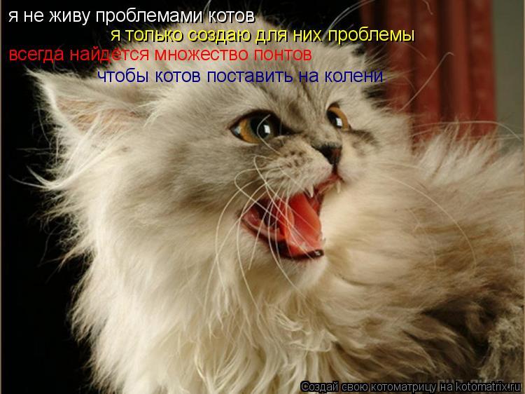 Котоматрица: я не живу проблемами котов я только создаю для них проблемы всегда найдётся множество понтов чтобы котов поставить на колени