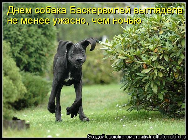 Котоматрица: Днем собака Баскервилей выглядела  не менее ужасно, чем ночью
