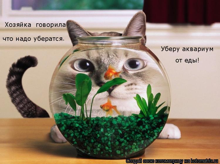 Котоматрица: Хозяйка  говорила что надо убератся . Уберу аквариум от еды!