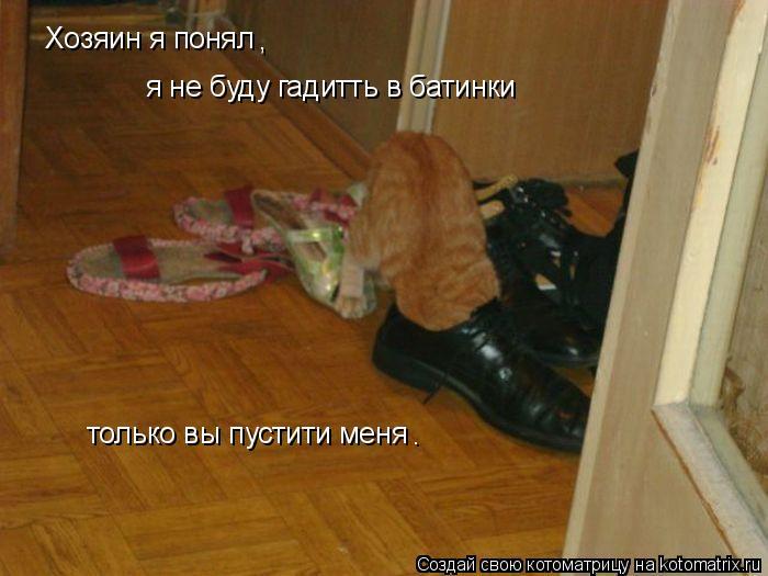 Котоматрица: Хозяин я понял , я не буду гадитть в батинки только вы пустити меня .