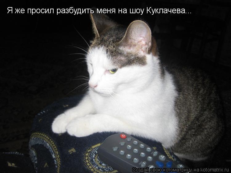 Котоматрица: Я же просил разбудить меня на шоу Куклачева...