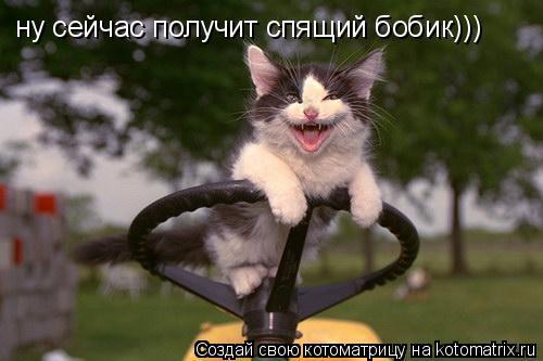 Котоматрица: ну сейчас получит спящий бобик)))