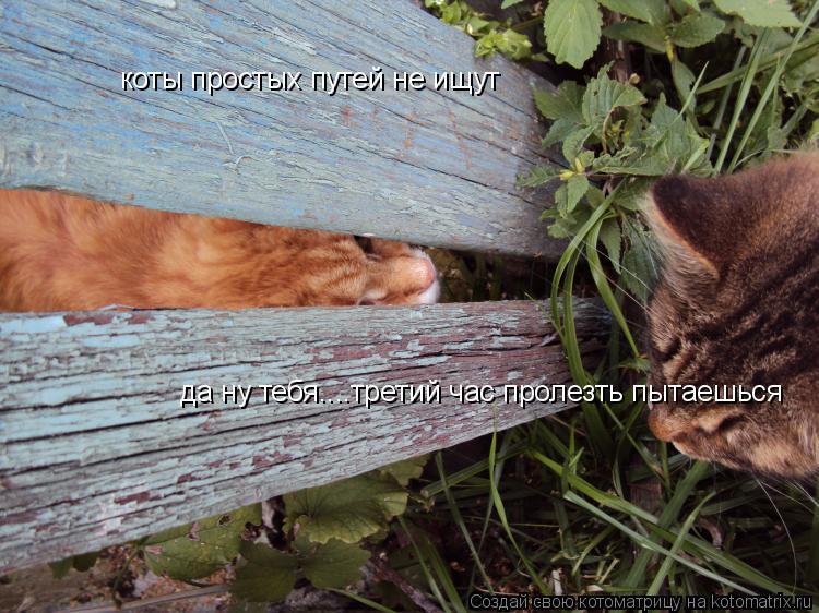 Котоматрица: коты простых путей не ищут да ну тебя....третий час пролезть пытаешься