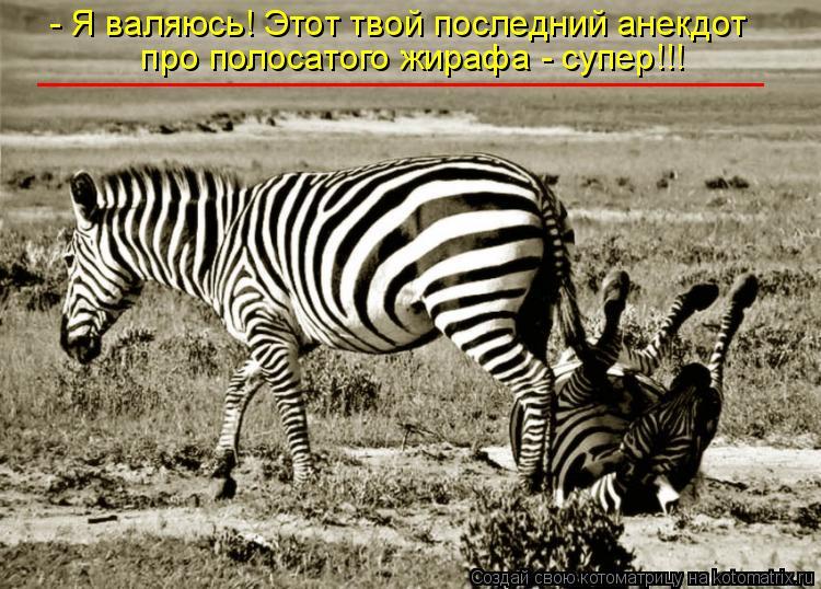 Котоматрица: - Я валяюсь! Этот твой последний анекдот  про полосатого жирафа - супер!!! _____________________________________