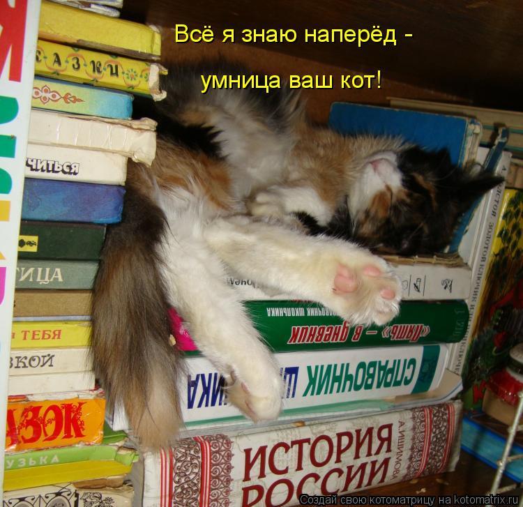 Котоматрица: Всё я знаю наперёд - умница ваш кот!