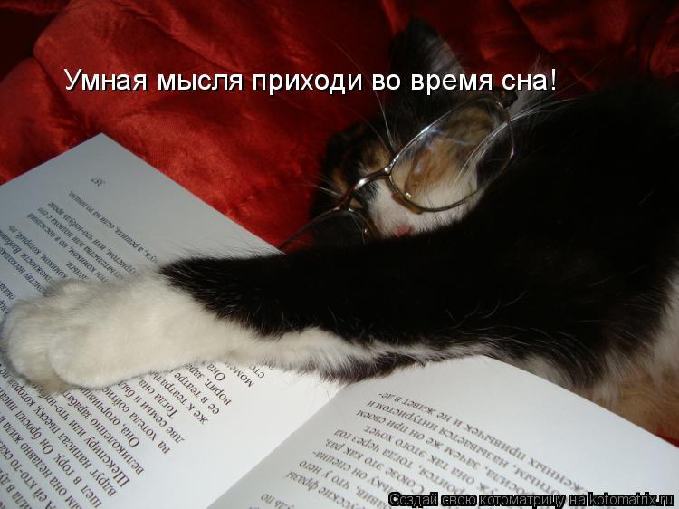 Котоматрица: Умная мысля приходи во время сна!