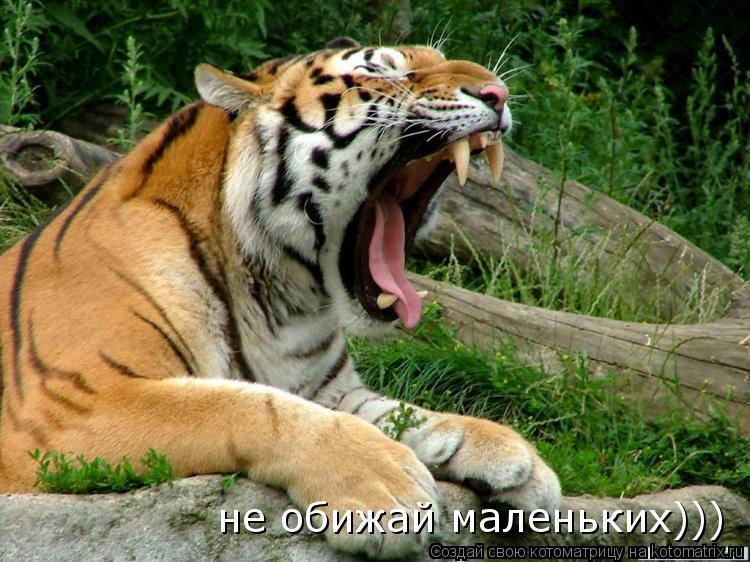 Котоматрица: не обижай маленьких)))