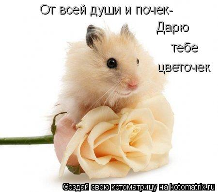 Котоматрица: От всей души и почек- Дарю  тебе цветочек