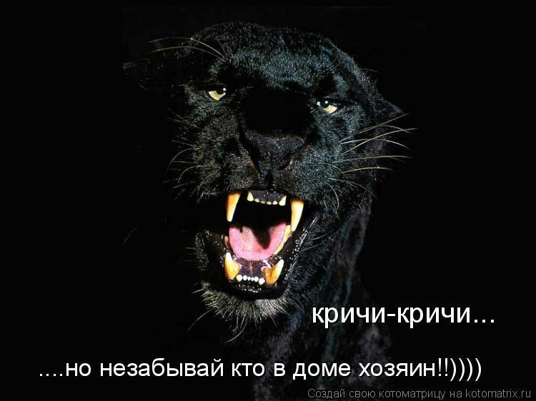 Котоматрица: кричи-кричи... ....но незабывай кто в доме хозяин!!))))