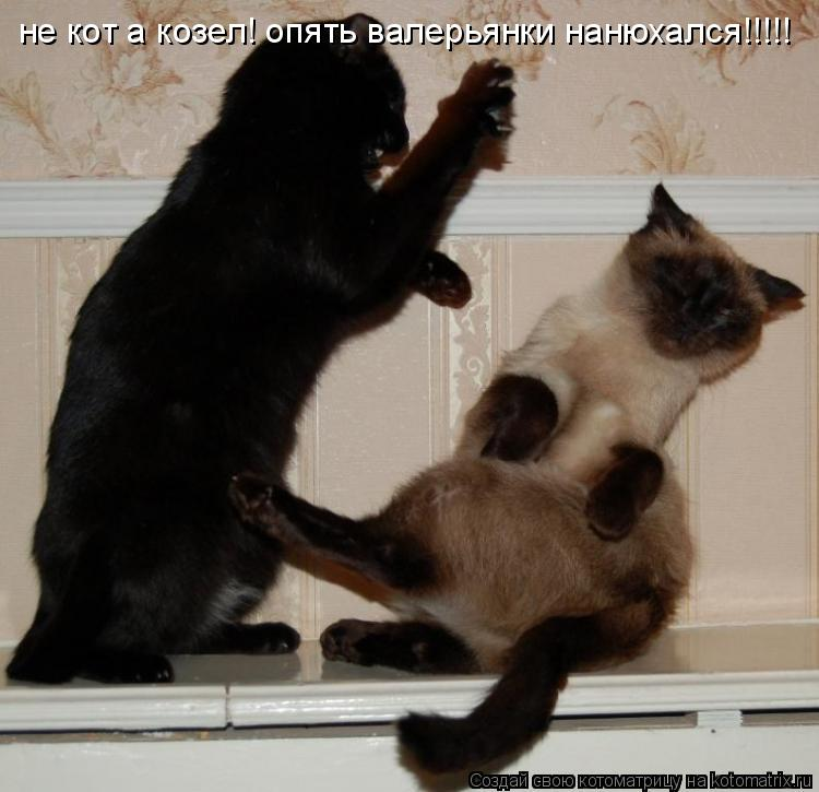 Котоматрица: не кот а козел! опять валерьянки нанюхался!!!!!