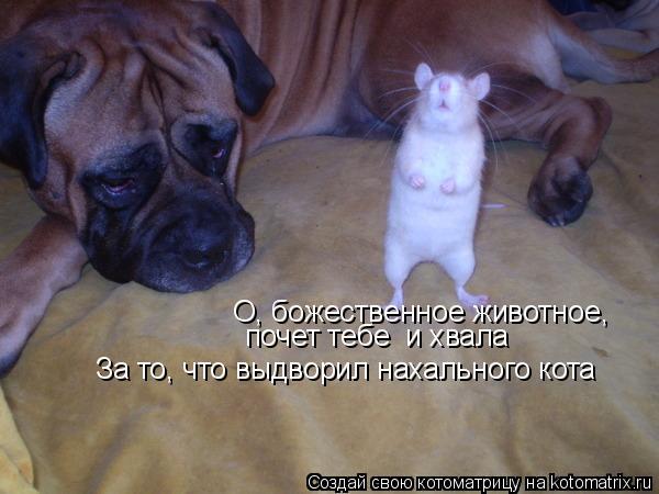 Котоматрица: О, божественное животное,  почет тебе  и хвала За то, что выдворил нахального кота