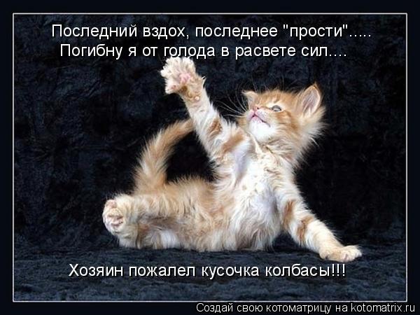 """Котоматрица: Последний вздох, последнее """"прости""""..... Погибну я от голода в расвете сил.... Хозяин пожалел кусочка колбасы!!!"""
