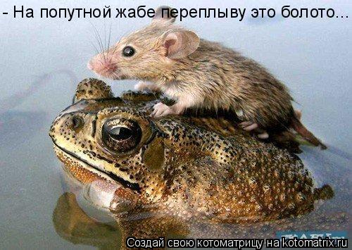 Котоматрица: - На попутной жабе переплыву это болото...