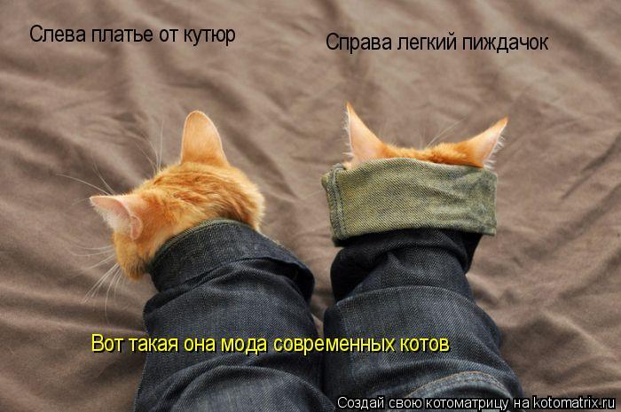 Котоматрица: Справа легкий пиждачок Слева платье от кутюр Вот такая она мода современных котов