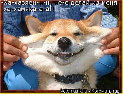 Котоматрица: -Ха-хазяен-н-н, не-е делай из меня ха-хамяка-а-а!!!