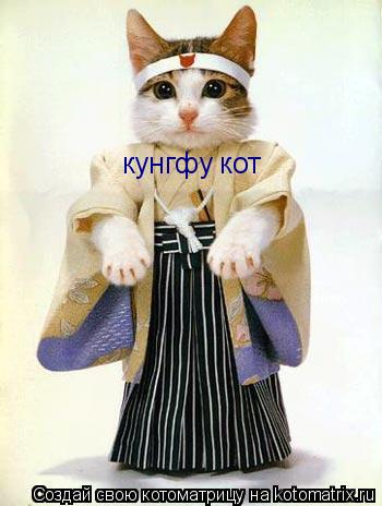 Котоматрица: кунгфу кот