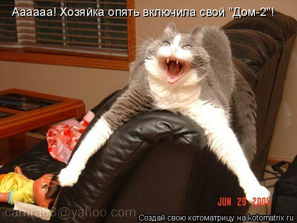 """Котоматрица: Аааааа! Хозяйка опять включила свой """"Дом-2""""!"""