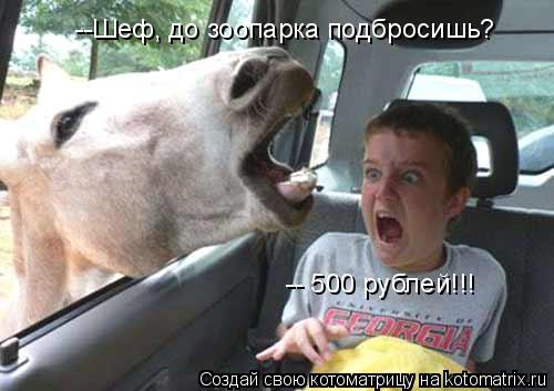 Котоматрица: --Шеф, до зоопарка подбросишь? -- 500 рублей!!!