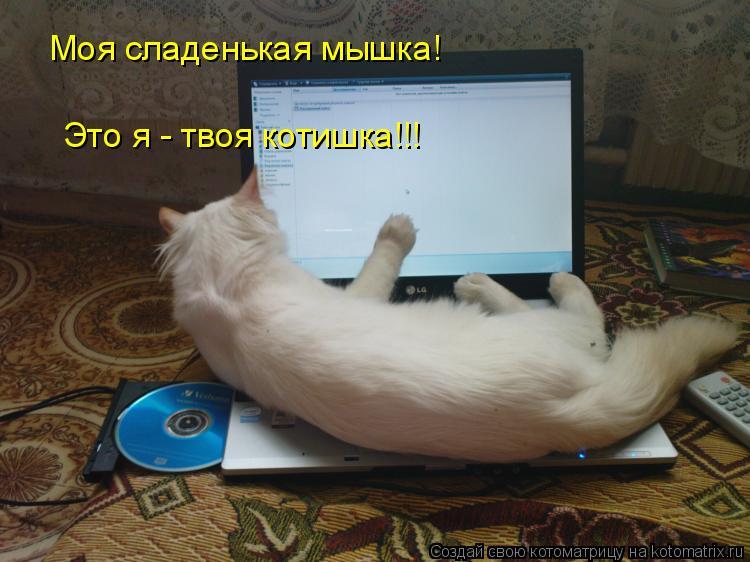 Котоматрица: Моя сладенькая мышка! Это я - твоя котишка!!!