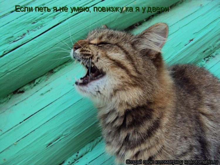 Котоматрица: Если петь я не умею, повизжу ка я у двери
