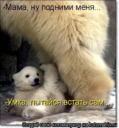 Котоматрица: -Мама, ну подними меня... -Умка, пытайся встать сам...