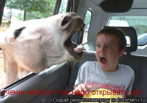 Котоматрица: ученик мой,вот так надо открывать рот