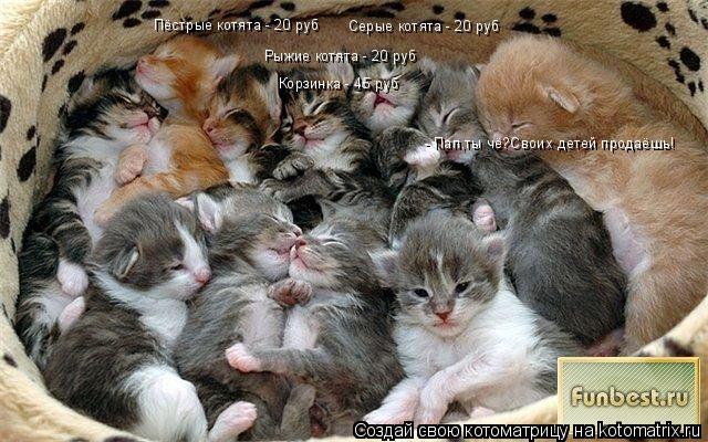 Котоматрица: Серые котята - 20 руб Пёстрые котята - 20 руб Рыжие котята - 20 руб Корзинка - 45 руб - Пап,ты чё?Своих детей продаёшь!