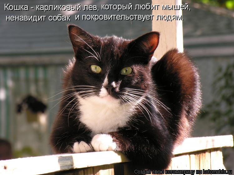 Котоматрица: Кошка - карликовый лев,  ненавидит собак  и покровительствует людям.  который любит мышей,