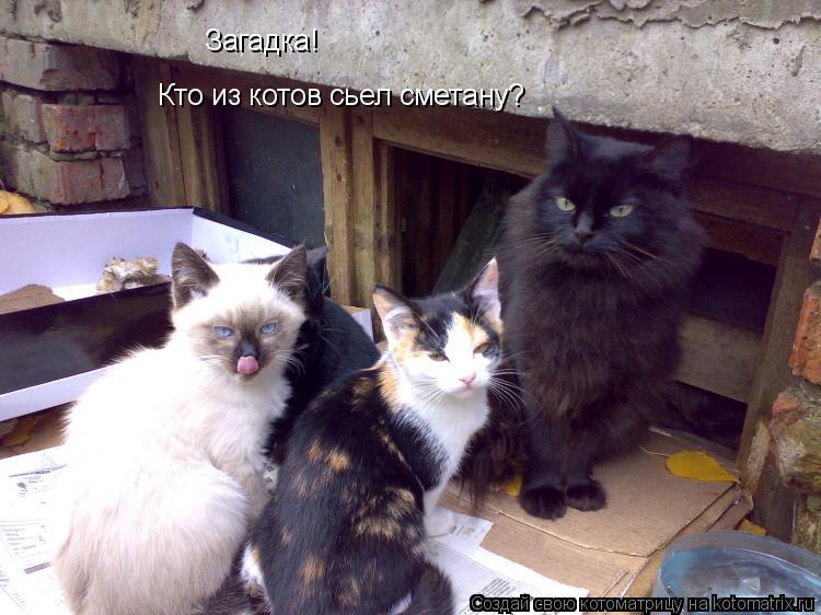 Котоматрица: Загадка! Кто из котов сьел сметану?