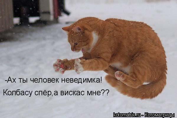 Котоматрица: Колбасу спёр,а вискас мне?? -Ах ты человек неведимка!