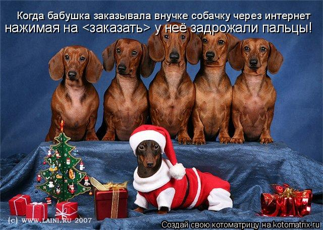 Котоматрица: Когда бабушка заказывала внучке собачку через интернет нажимая на <заказать> у неё задрожали пальцы!