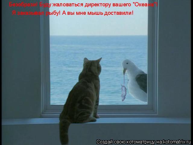 """Котоматрица: Безобрази! Буду жаловаться директору вашего """"Океана""""! Я заказывал рыбу! А вы мне мышь доставили!"""