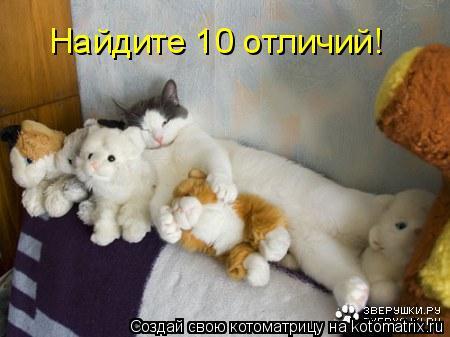 Котоматрица: Найдите 10 отличий!