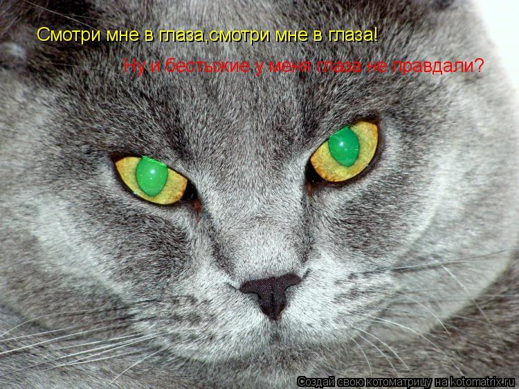 Котоматрица: Смотри мне в глаза,смотри мне в глаза! Ну и бестыжие у меня глаза не правдали?