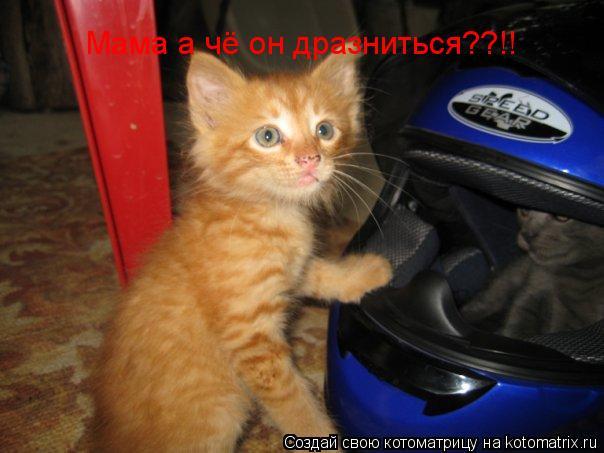 Котоматрица: Мама а чё он дразниться??!!
