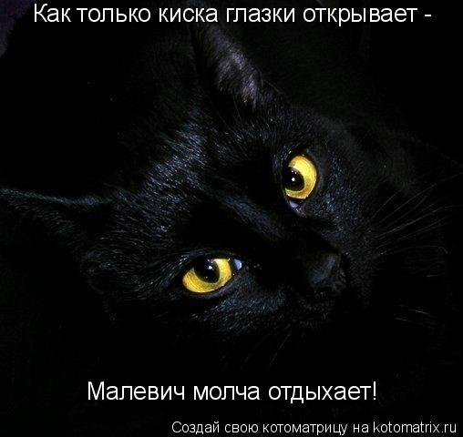 Котоматрица: Как только киска глазки открывает -  Малевич молча отдыхает!