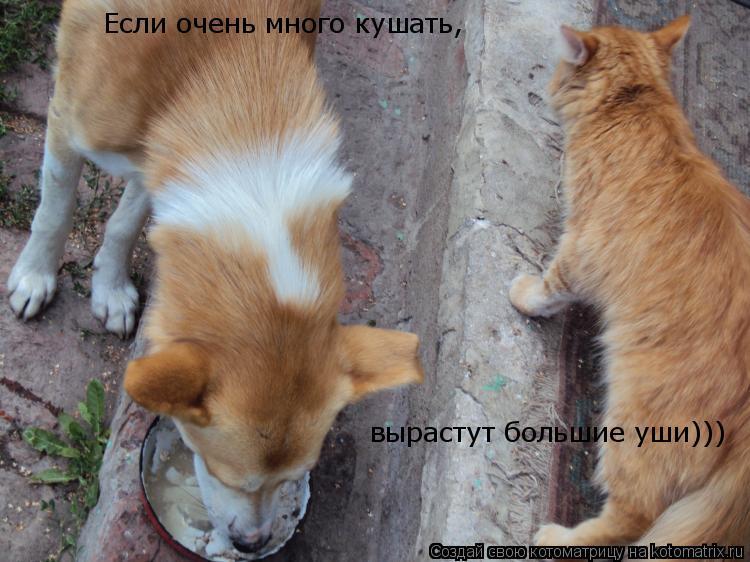 Котоматрица: Если очень много кушать, вырастут большие уши)))