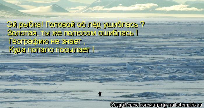 Котоматрица: Эй,рыбка! Головой об лёд ушиблась ? Золотая, ты же полюсом ошиблась ! Географию не знает , Куда попало посылает !