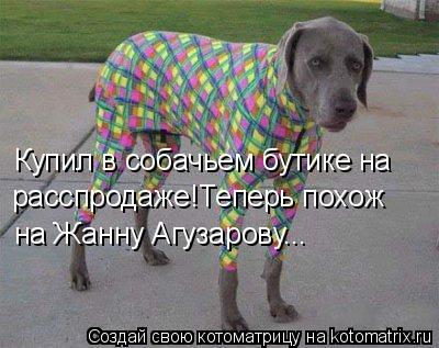 Котоматрица: Купил в собачьем бутике на  расспродаже!Теперь похож на Жанну Агузарову...