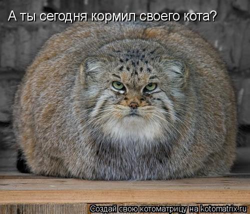 Котоматрица: А ты сегодня кормил своего кота?