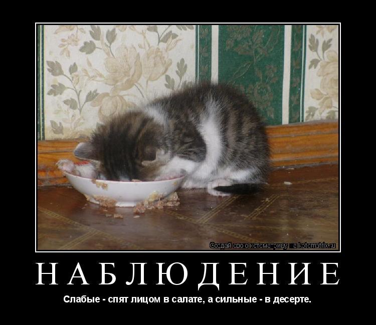 Котоматрица: Наблюдение  Слабые - спят лицом в салате, а сильные - в десерте.