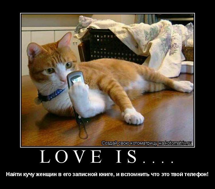 Котоматрица: Love is.... Найти кучу женщин в его записной книге, и вспомнить что это твой телефон!