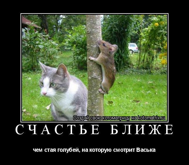 Котоматрица: Счастье ближе чем стая голубей, на которую смотрит Васька