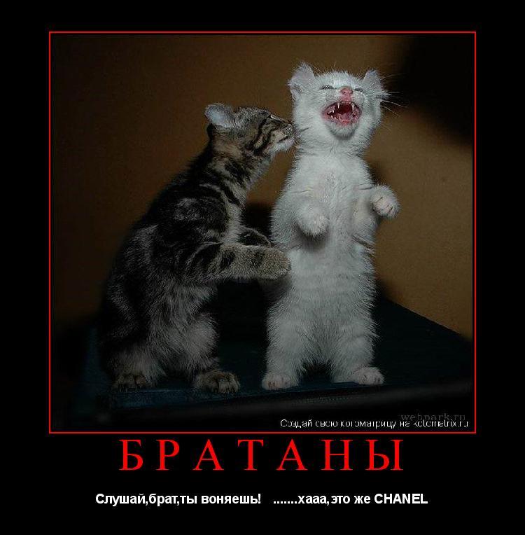 Котоматрица: Братаны Слушай,брат,ты воняешь!   .......хааа,это же CHANEL