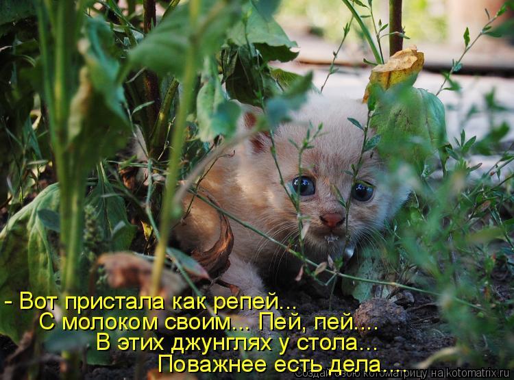 Котоматрица: - Вот пристала как репей... С молоком своим... Пей, пей.... В этих джунглях у стола...  Поважнее есть дела....