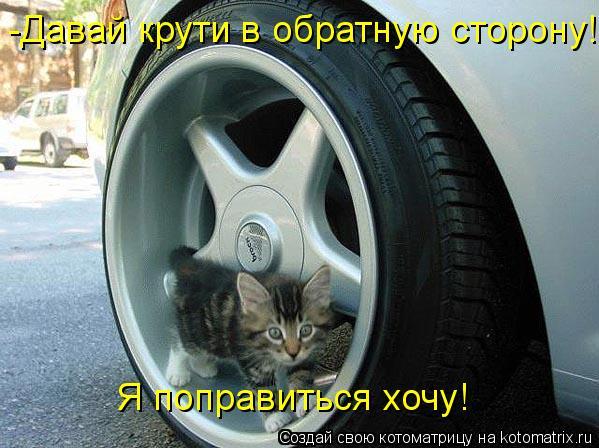 Котоматрица: -Давай крути в обратную сторону! Я поправиться хочу!